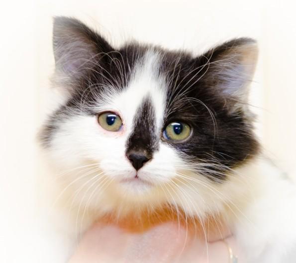 Feline Leukemia Virus (FeLV) And Feline Immunodeficiency
