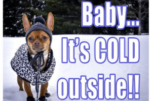 dog wearing hat and coat, cold dog