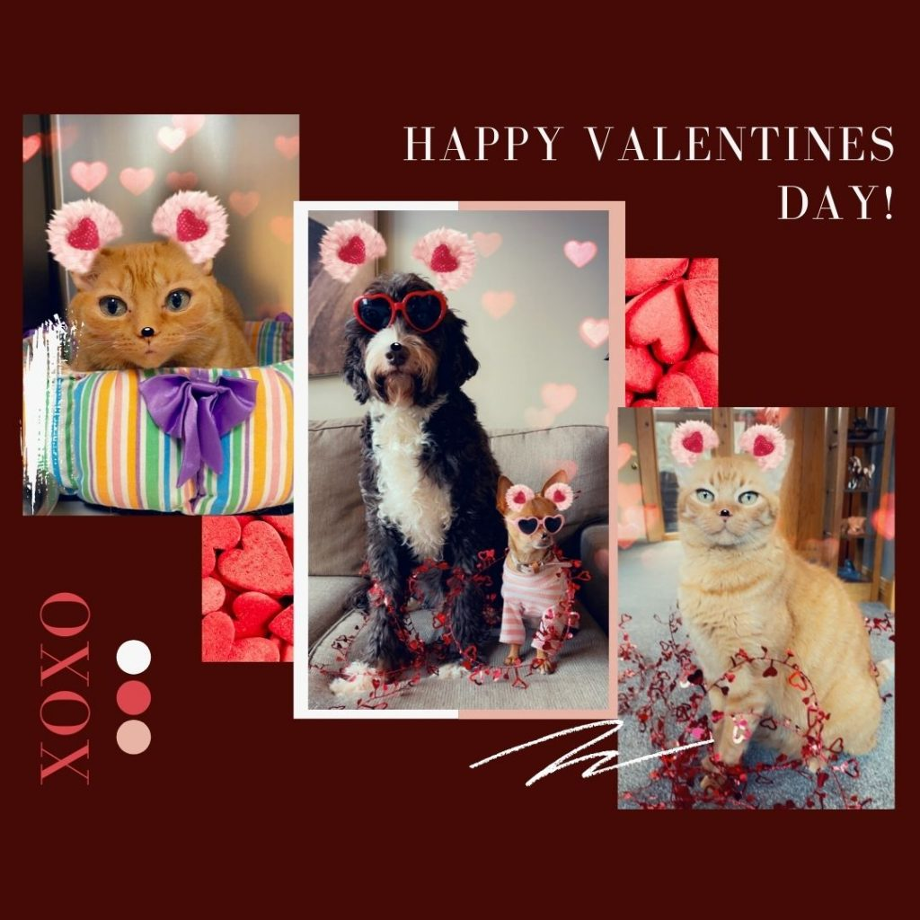 Dogs and cats valentines