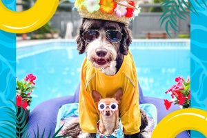 Dogs in funny clothes by pool