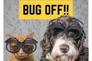 cat and dog wearig bug glasses