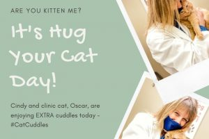 Veterinary assistant hugging clinic cat for Hug Your Cat Day